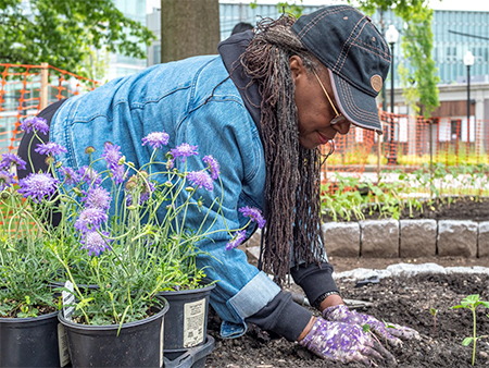 A woman wearing a baseball cap and denim jacket kneels in dirt to plant sunflower seeds.
