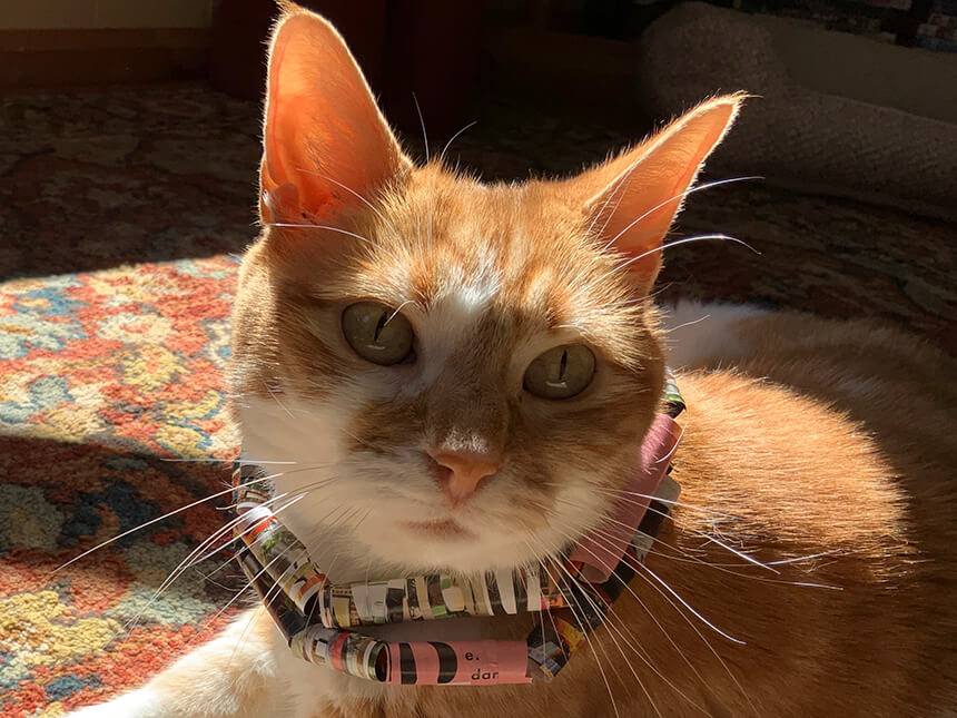 cat modeling beaded necklace made of rolled up paper strips