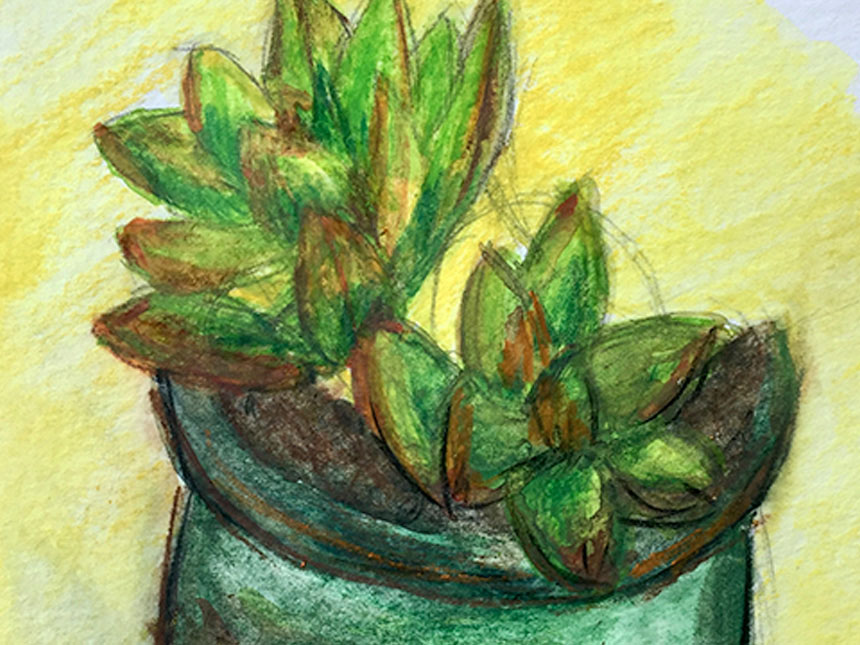 detail of watercolor drawing depicting potted plant