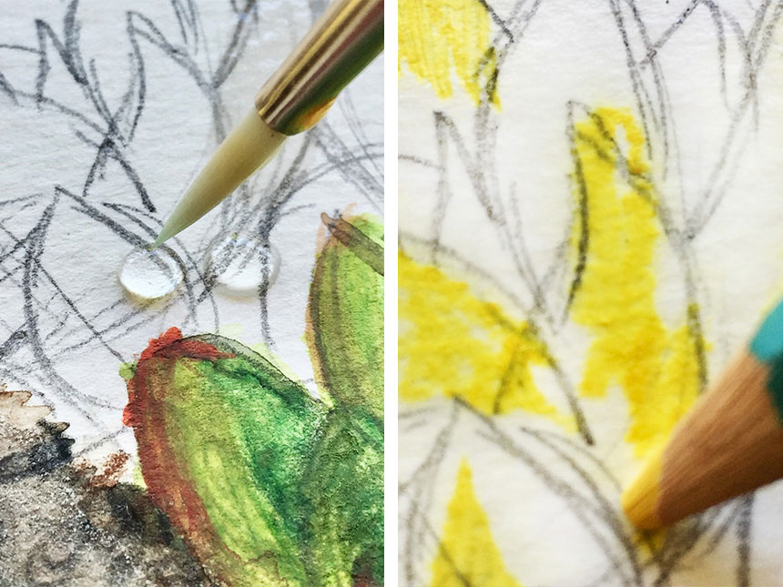 drawing with watercolor pencils of other colors