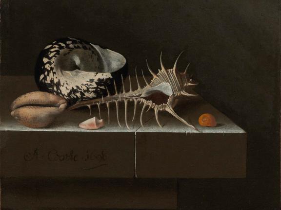 Adriaen Coorte, Still Life with Seashells, 1698.