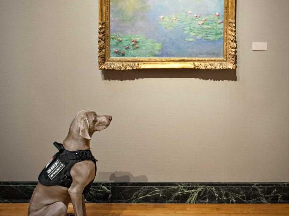 riley the museum dog looking at a painting by monet