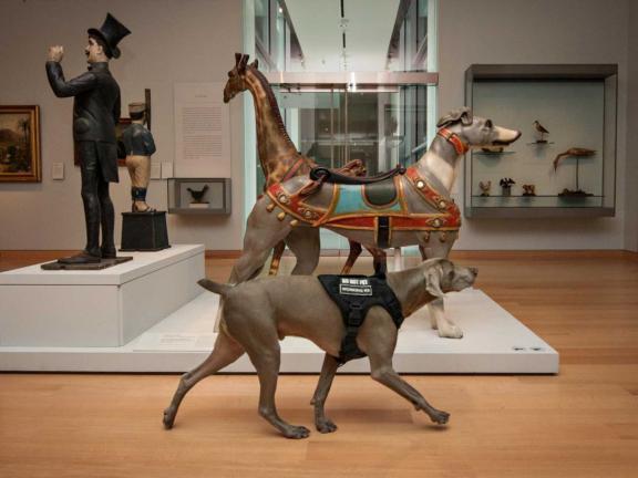 riley the museum dog walks through a gallery of folk art