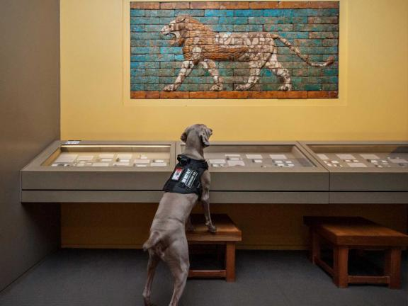 riley the museum dog looking at art