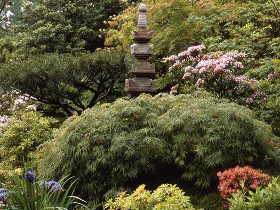 View of Japanese Garden with stone sculpture towering over shrubs