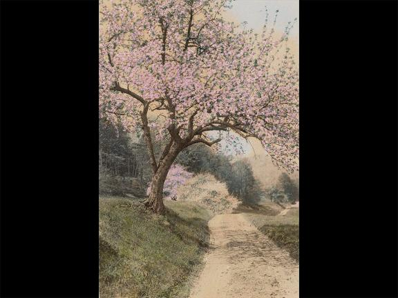 Wallace Nutting's hand-colored photograph, A Peep at the Hills