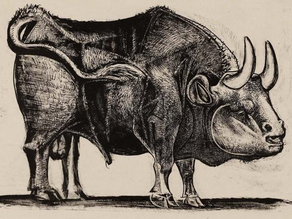 Drawing of large bull by Pablo Picasso